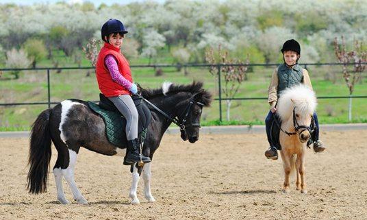 סוסי פוני.jpg