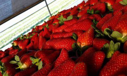 תותים2.jpg