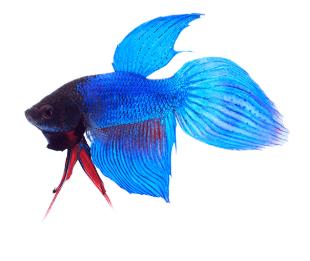 דג.png