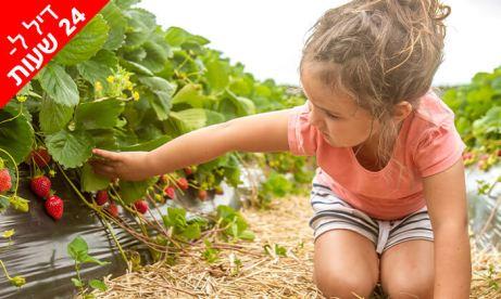 תות בשדה - משק אריאל
