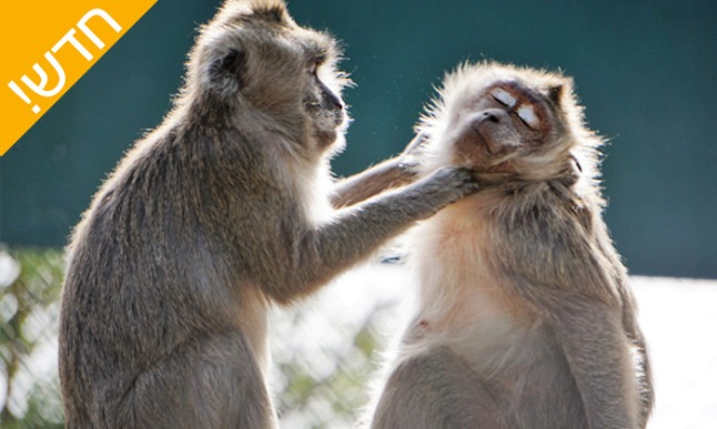 פארק הקופים1