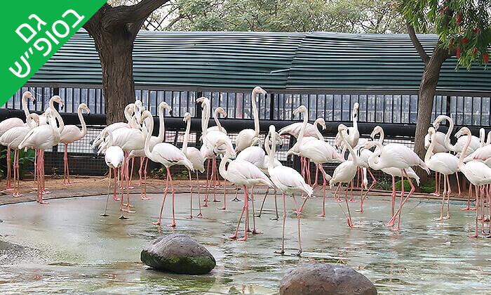 פלמנגו גן החיות ראשלצ
